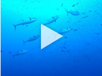 Flipside Science: Sustainable Seafood