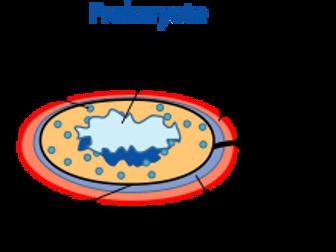 Prokaryotic organelles