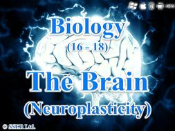 C.2.c. Neuroplasticity