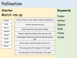 KS3 Plants - Lesson 3 - Pollination