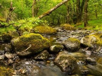 Ecosystem services of woodland: Presentation