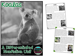Differentiated Nonfiction Unit: Koalas