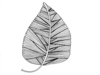 Leaf: Geography and Science: Colouring page