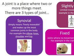 GCSE PE Skeletal System - bones/ joints/ joint actions