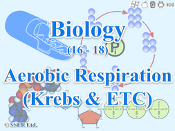 3.5.2 Respiration 3 - Aerobic Respiration, Krebs Cycle & Electron Transport Chain (ETC)