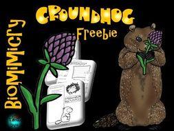 Groundhog Freebie - STEAM, Biomimicry