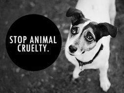 animal cruelty research article source for argumentative  other