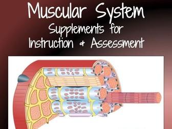 Muscular System Supplements for Instruction and Assessment