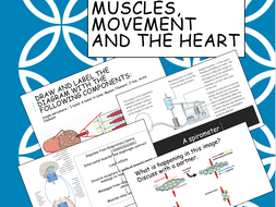 IAL 7B Muscles, Movement and the Heart