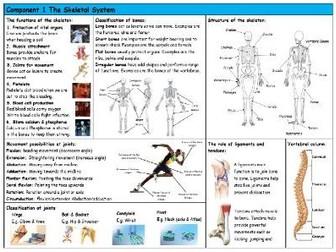 GCSE PE – Edexcel (9-1) – Skeletal System - Knowledge Organiser/Revision Mat