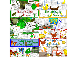 Life cycle bundle- Frog, Chicken, Duck, Butterfly