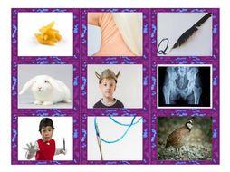 Phonics Consonant Letters m-n-q-r-v-x Photo Card Game