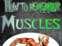 PE How to Remember Muscles