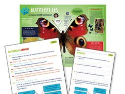 Year 4 Butterflies Reading comprehension