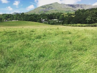 Meadows and Grasses