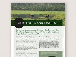 WWF and Our Planet: Rainforests KS2 & KS3 Activity Set