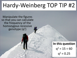 Hardy-Weinberg principle (CIE International A-level Biology)